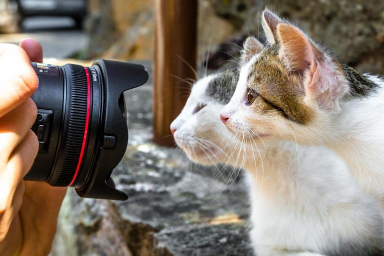 koty patrzą w obiektyw