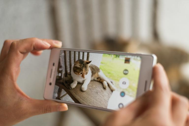 zdjęcie kota smartfonem