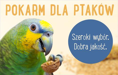 pokarm dla ptaka