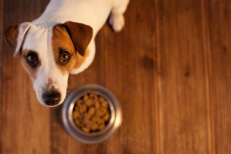 hipoalergiczna karma dla psa alergika