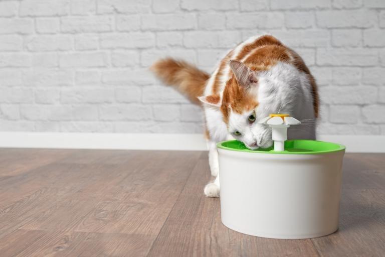 poidełko-fontanna dla kota