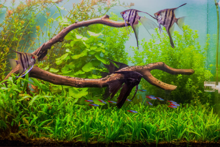 rybki ozdobne do akwarium