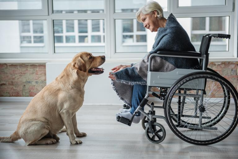 pies terapeuta z osobą niepełnosprawną