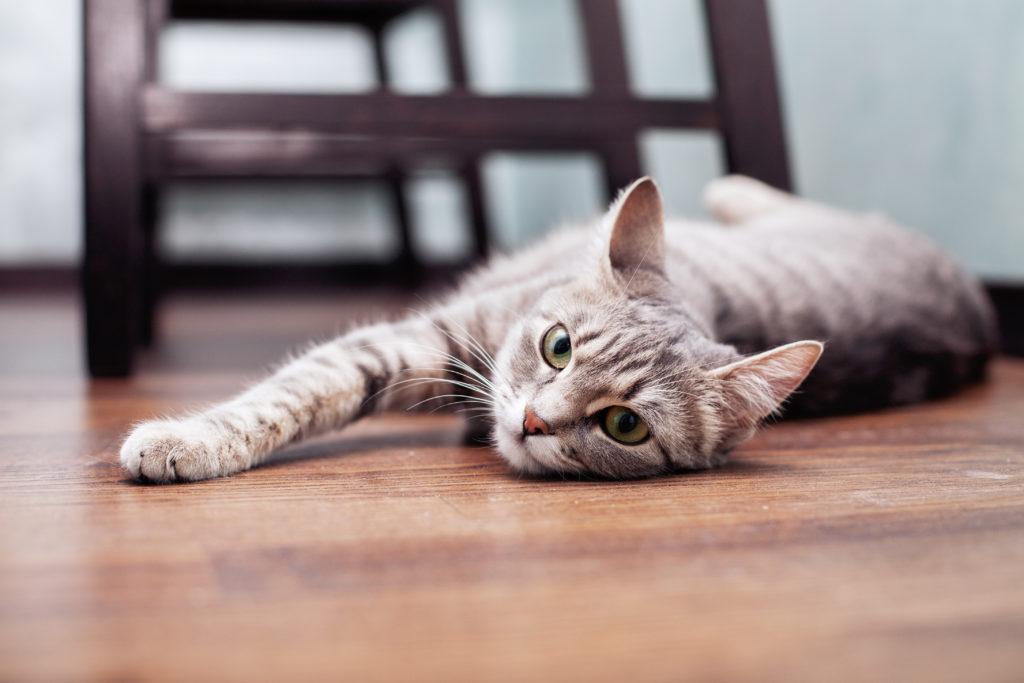 zwalczanie stresu u kota