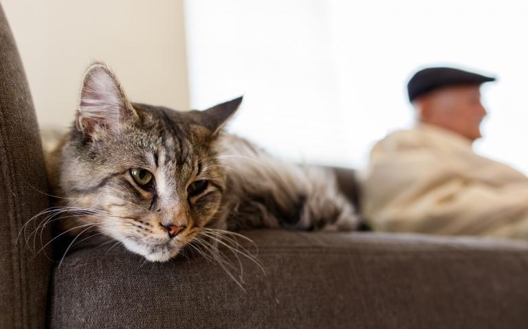 wiek kota