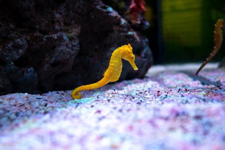 akwarium z konikiem morskim