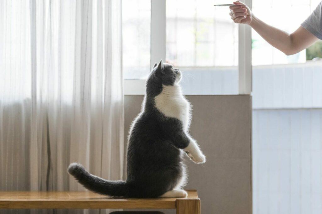 trening z klikerem dla kota