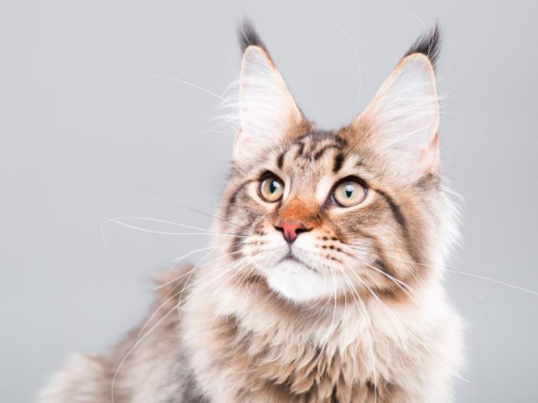 jak obliczyć wiek kota