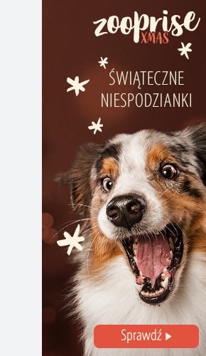 xmas campaigne dog