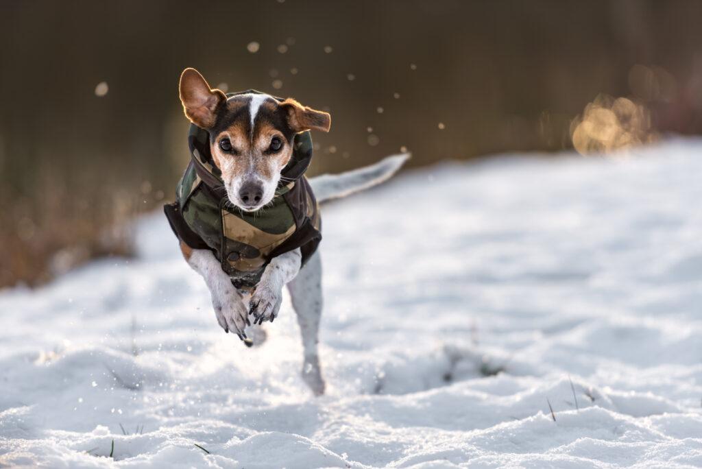ubranka dla psa na zimię