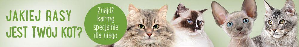 karma dla kotow rasowych
