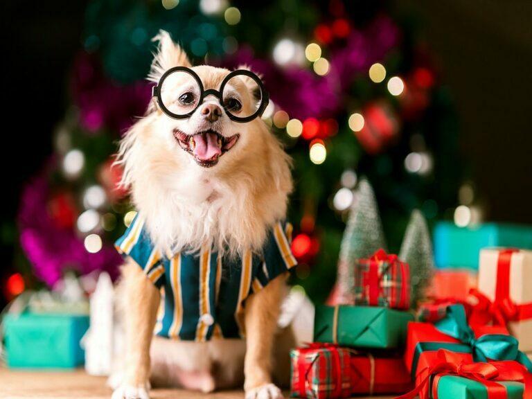 świąteczne prezenty dla psów