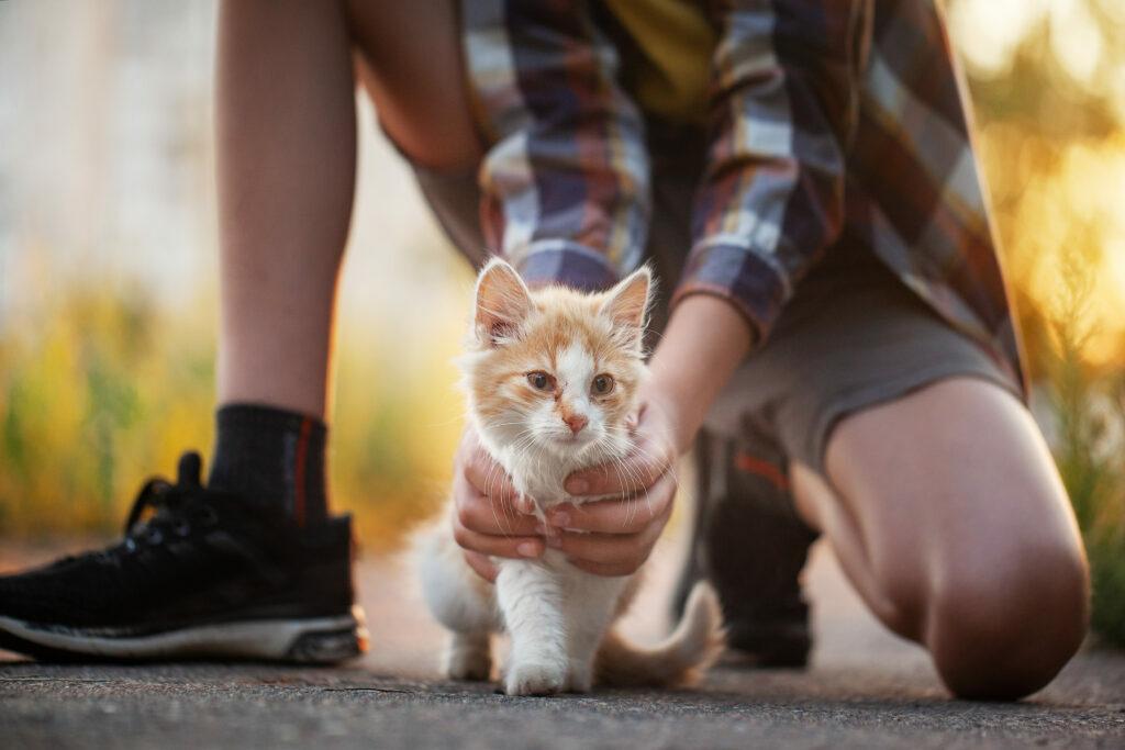 dziecko znajduje kota