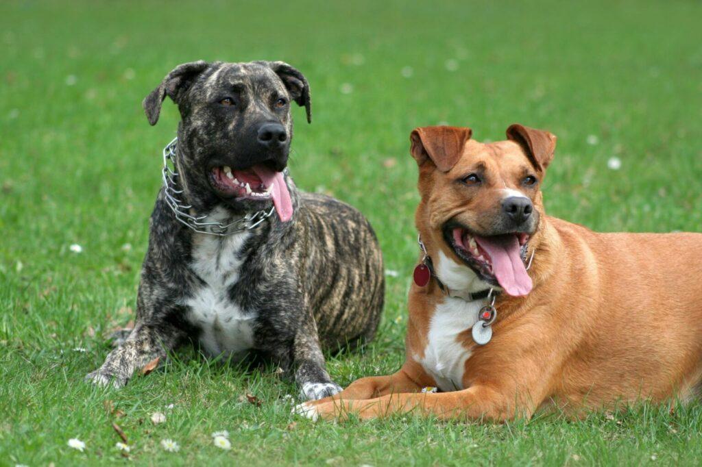 kolczatki i dławiki dla psów