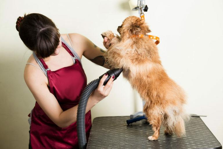 maszynka do strzyżenia psów