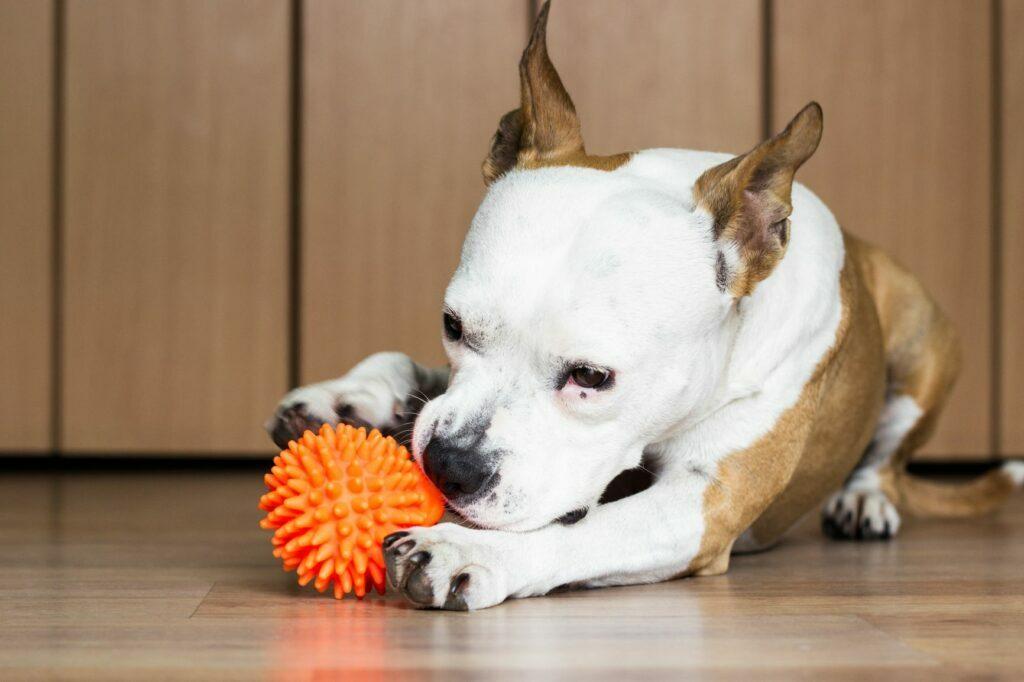 zabawka do gryzienia dla psa