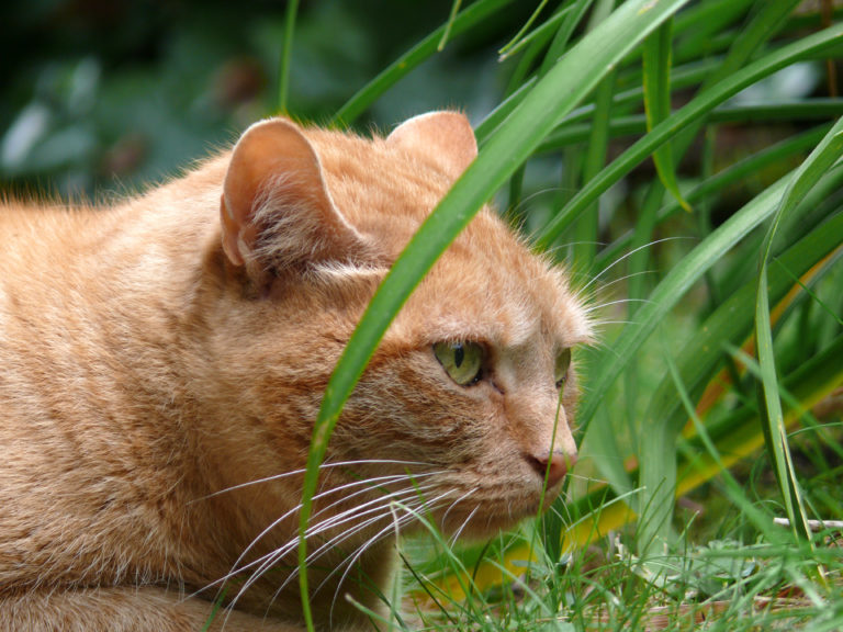 Rosliny Bezpieczne I Szkodliwe Dla Kota Magazyn O Zwierzetach Zooplus