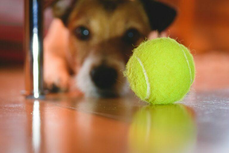 piłka tenisowa dla psa