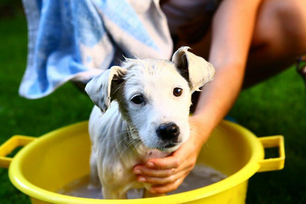 jak wykąpać szczeniaka