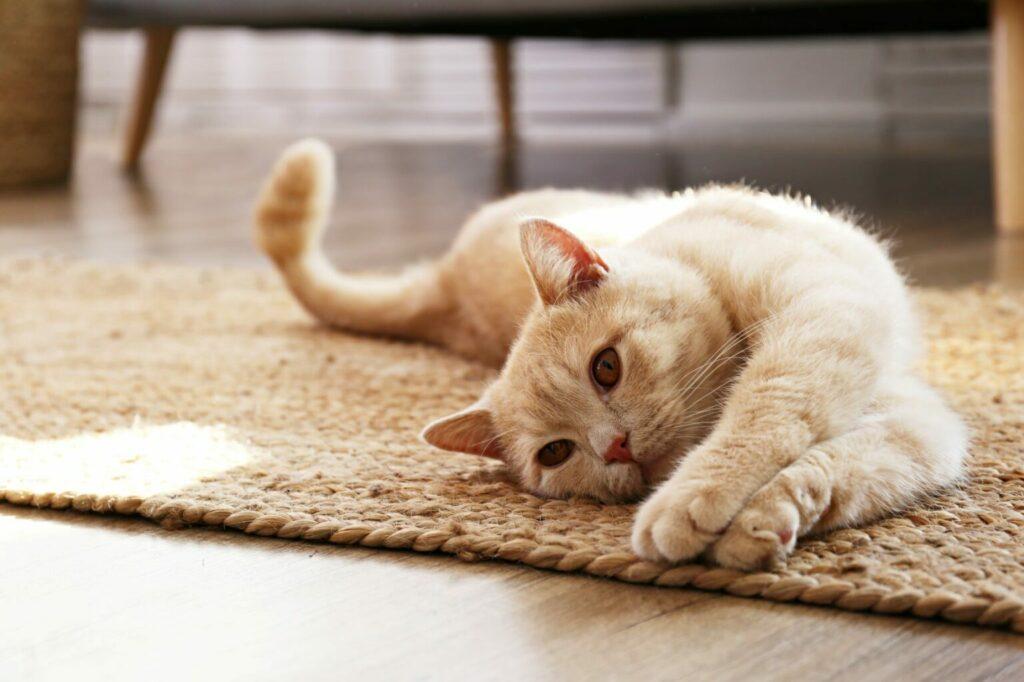 lęk separacyjny u kota