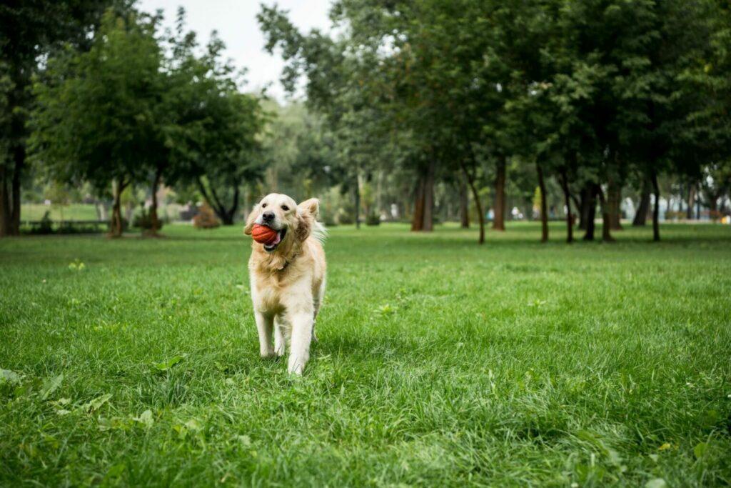 lęk separacyjny u psa po izolacji