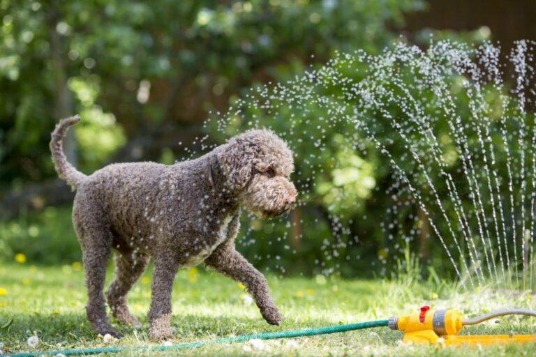 ochłoda dla psa w lecie