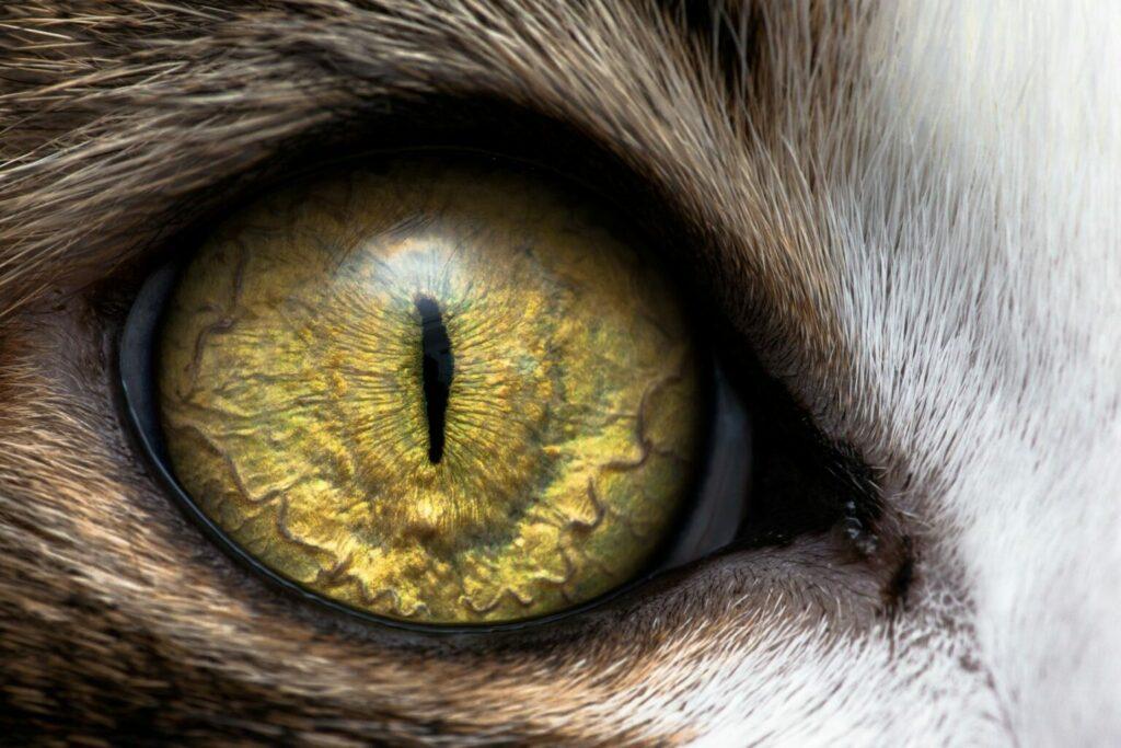 jak widzą koty