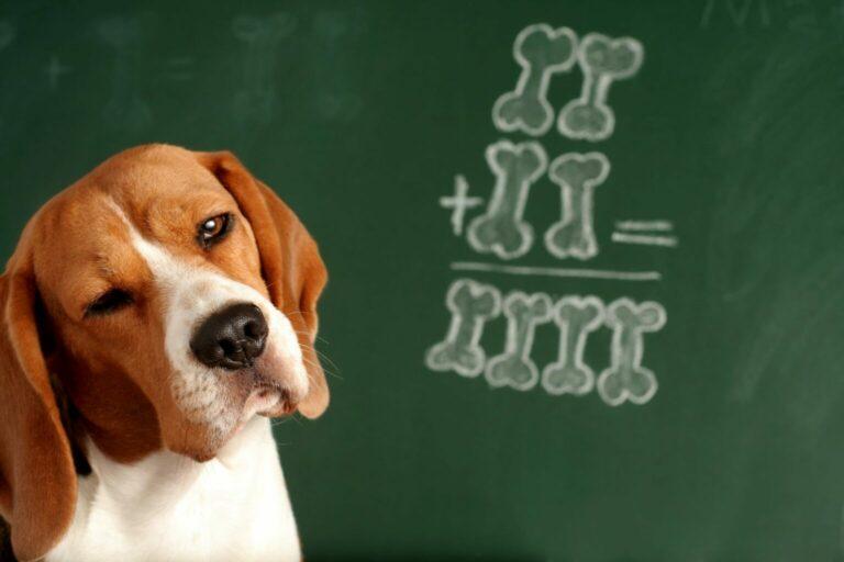 co rozumieją psy