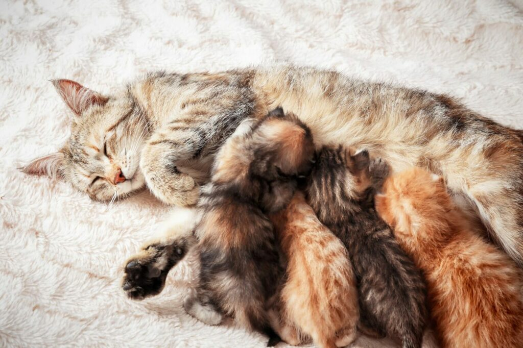 kocia mama z kociętami