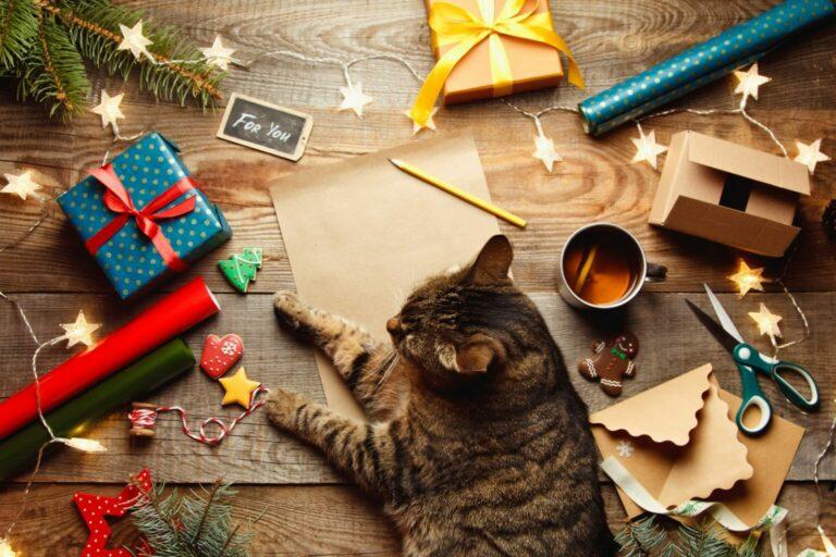 kalendarz adwentowy dla kota