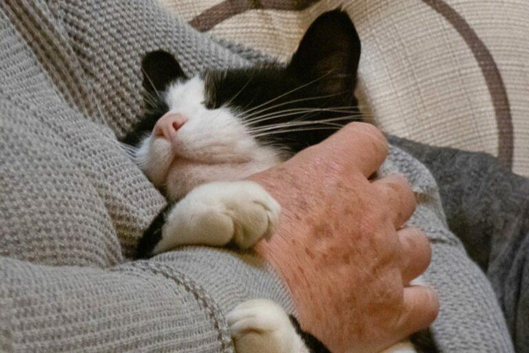 koty terapeutyczne
