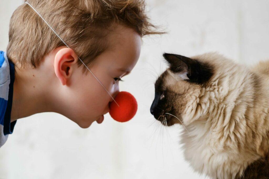 koty terapeutyczne dla dzieci