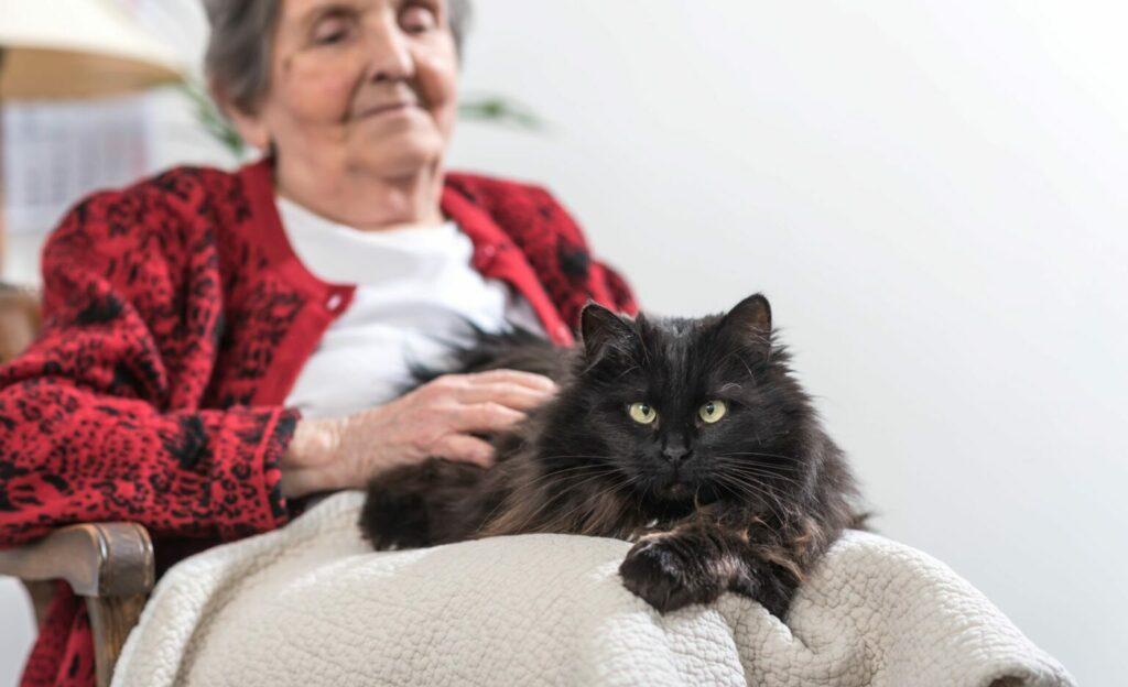koty terapeutyczne dla seniorów