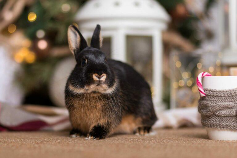 święta z królikiem