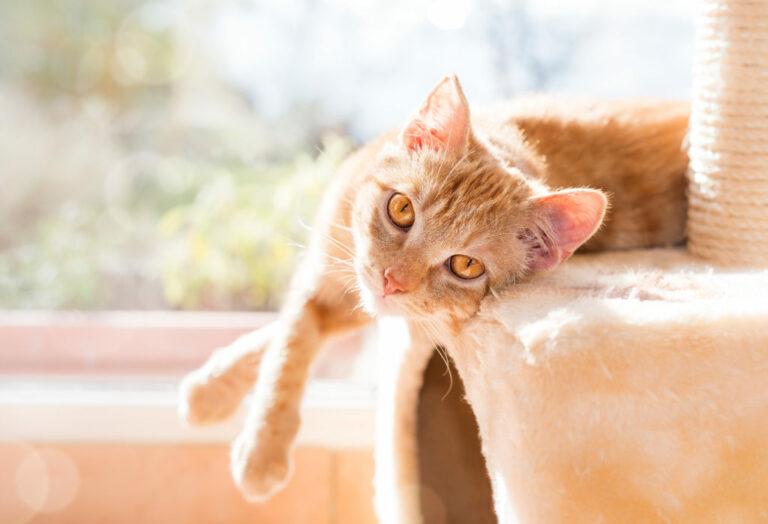co-muszę-wiedzieć-przed-adopcją-kota