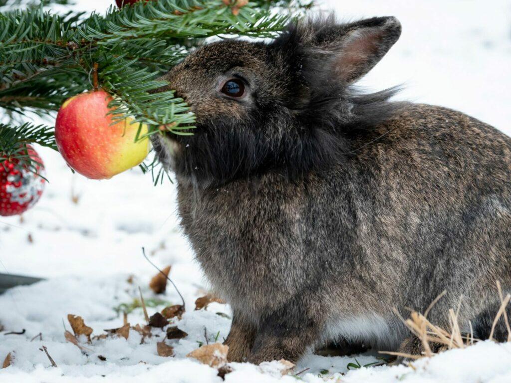 drzewko świąteczne dla królika