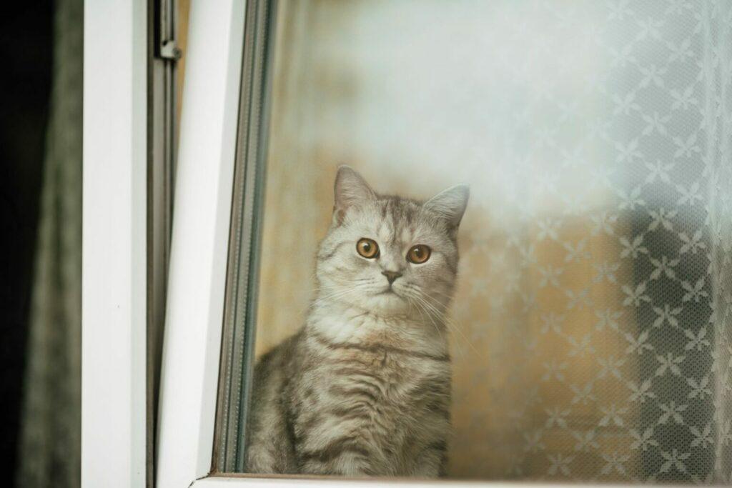 kot za oknem uchylnym