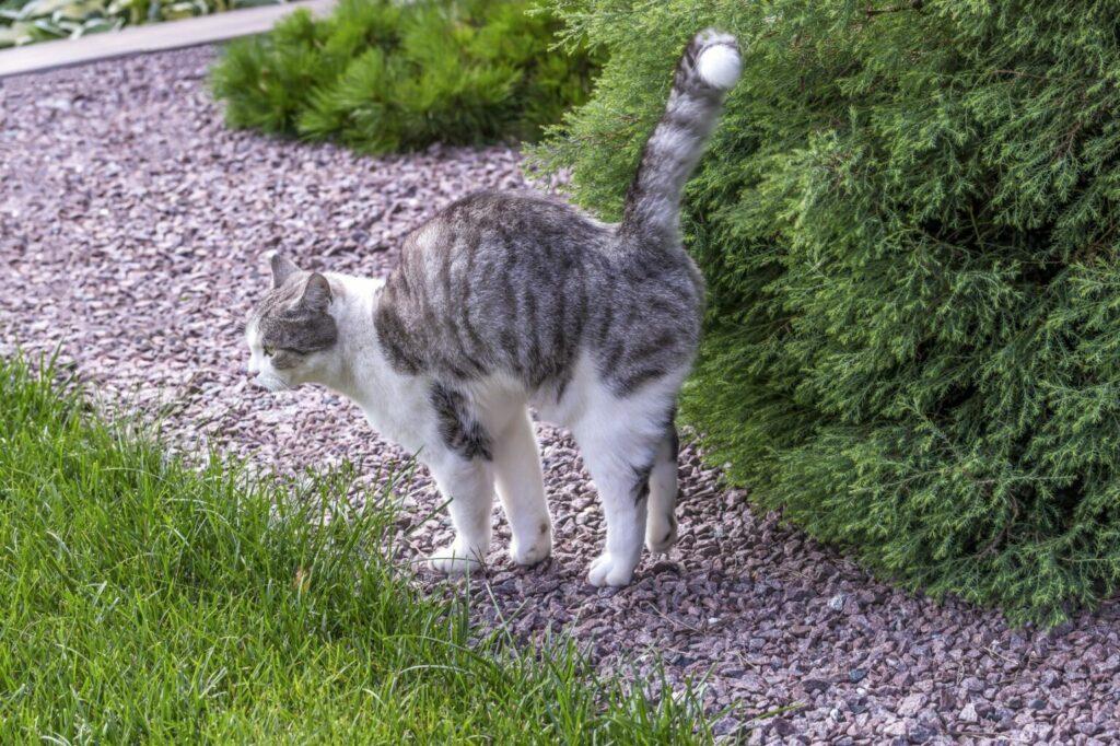 kot zaznaczający teren