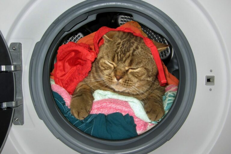 mieszkanie bezpieczne dla kota