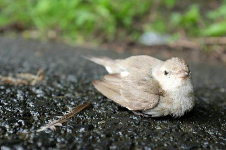 osłabiony dziki ptak - co zrobić?