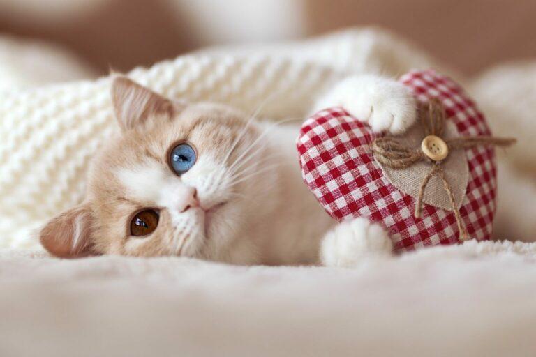Walentynki z kotem