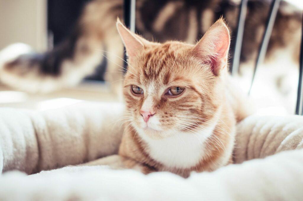 kot w przytulnym legowisku
