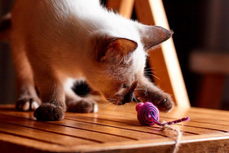 ćwiczenia dla kota