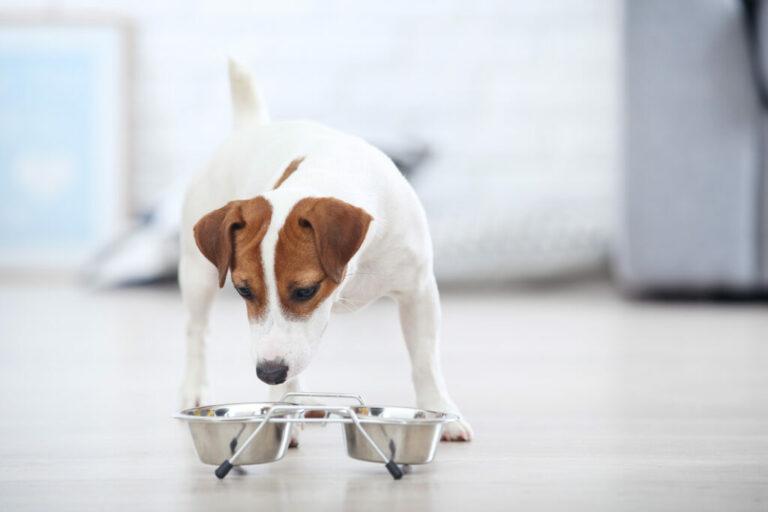 zmiana karmy u psa