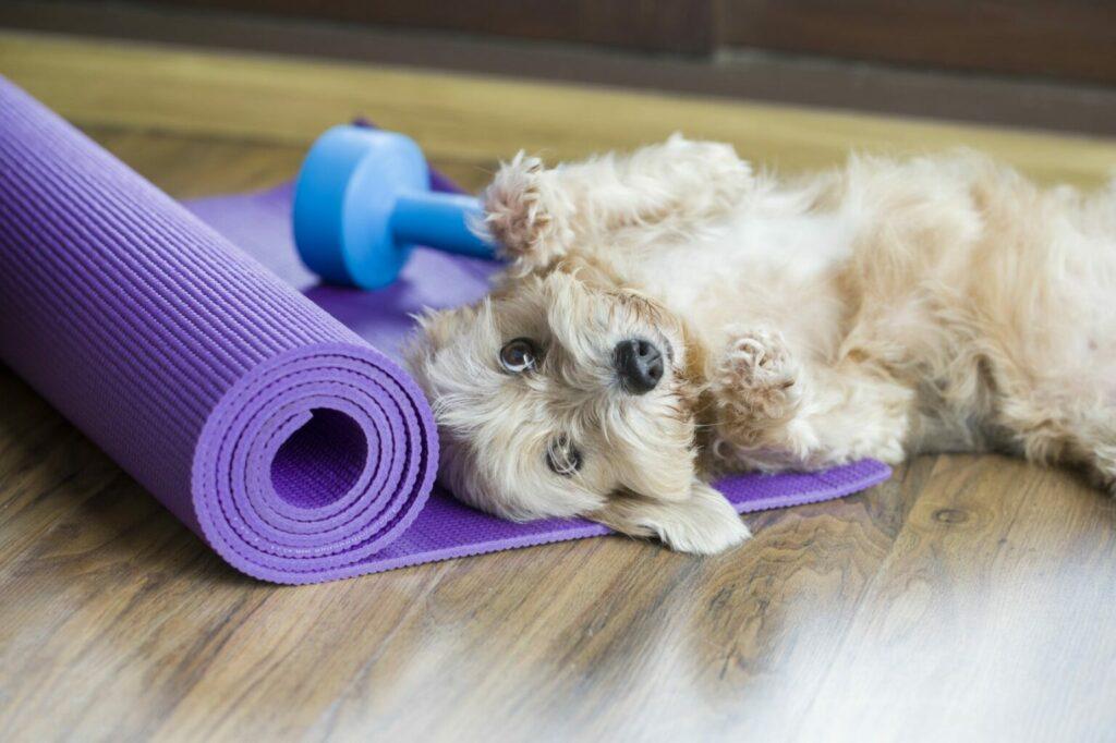 fitness z psem