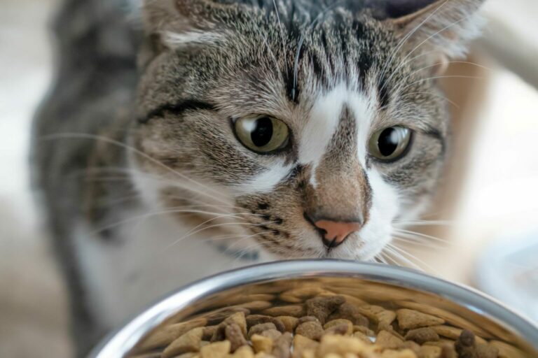 odpowiednia ilość karmy dla kota