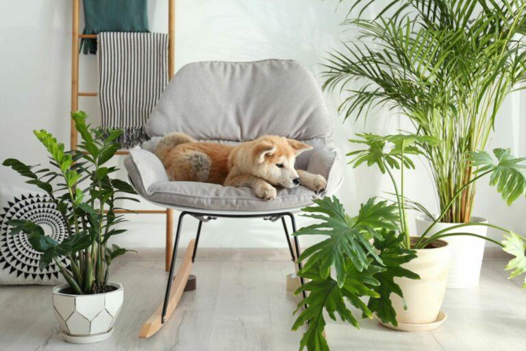 rośliny trujące dla psa - lista