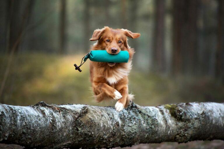 sporty dla psa