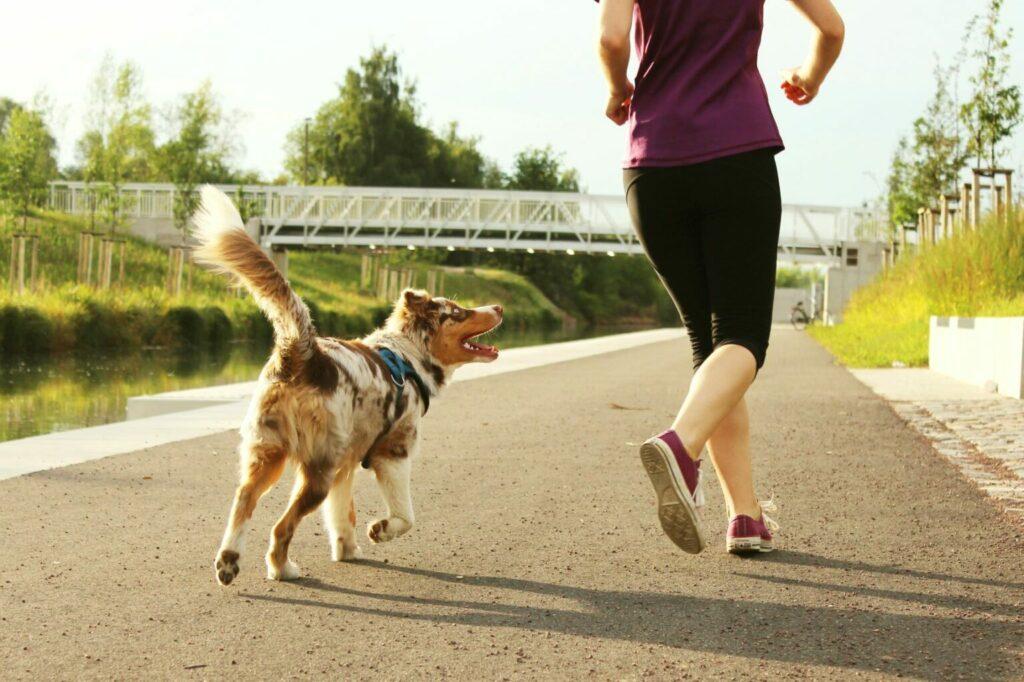 sporty wytrzymałościowe dla psa