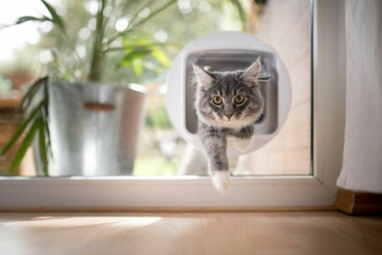 jak zamontować drzwiczki dla kota